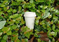 Coffee 100% Compostable Paper Cups Customized Logo For Fast Food Restaurants
